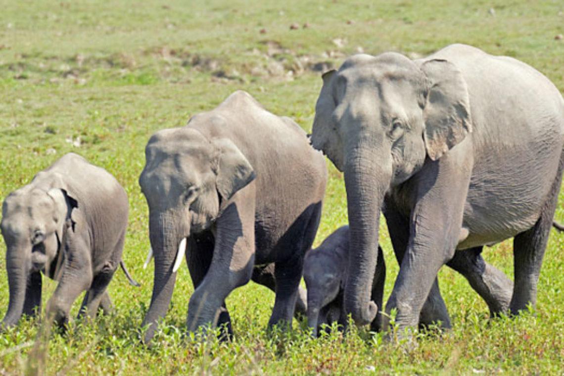 Partir au Sri Lanka en Décembre